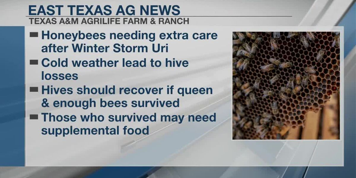 East Texas Ag News: Honeybee's need extra care after extreme winter storm