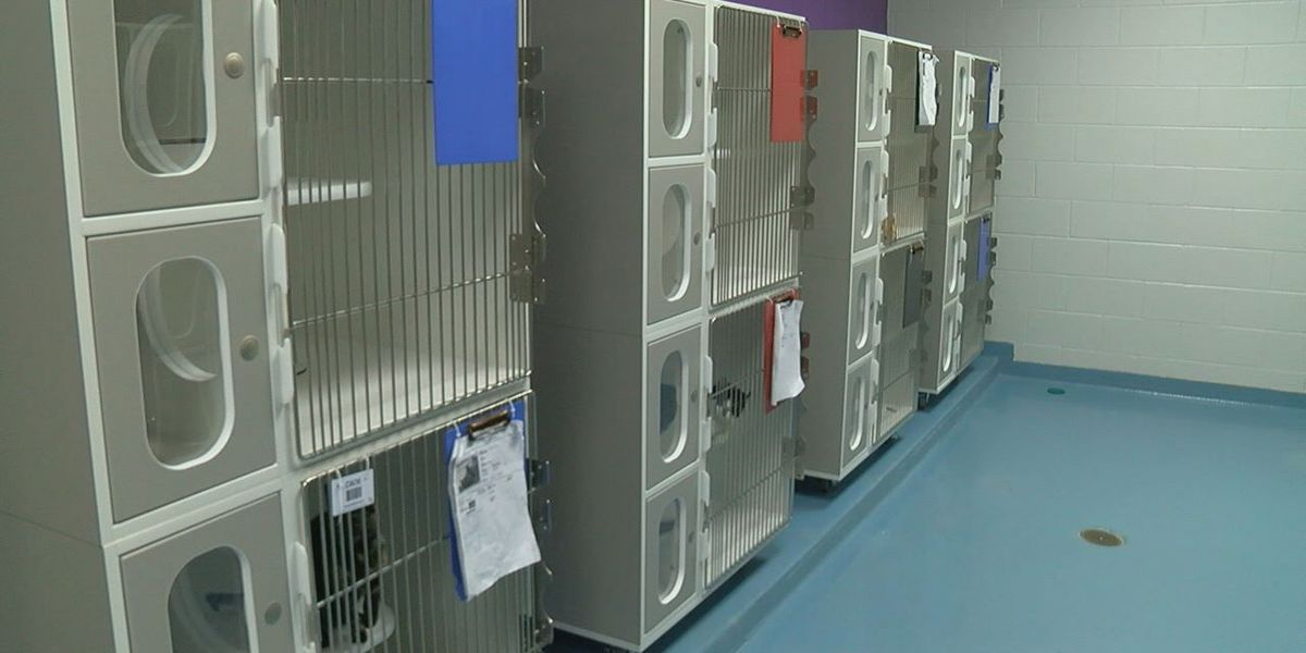 Lufkin animal shelter receives money from PetSmart Charities