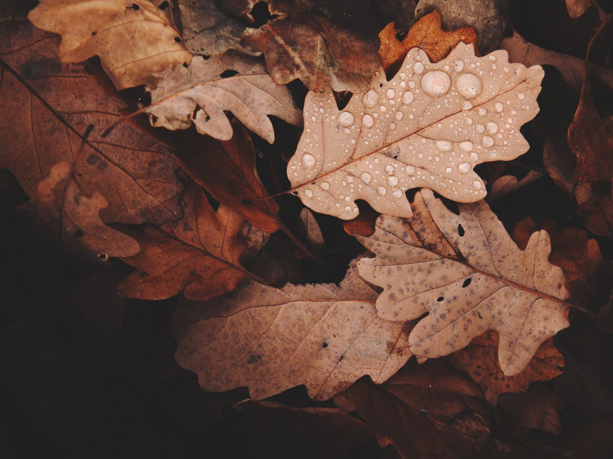 East Texas Ag News: What to do with autumn leaves on your lawn?