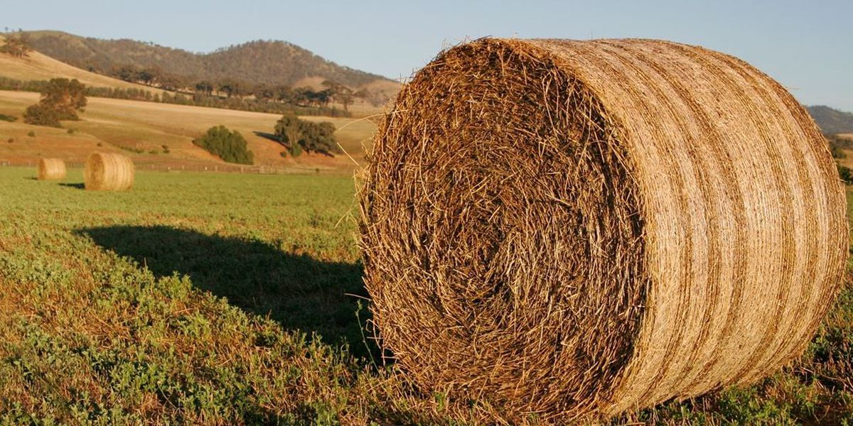 East Texas Ag News: Hay and cattle numbers for the week of March 21