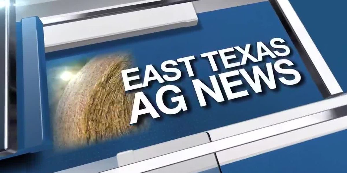 East Texas Ag News: This week's hay prices steady in all regions of Texas