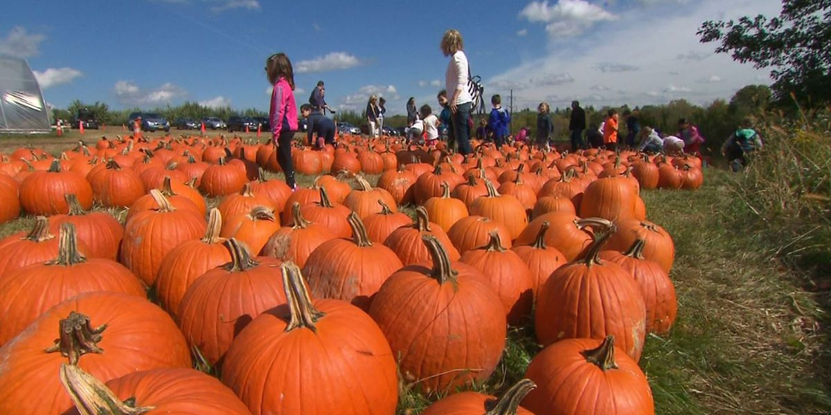 Ways to stay safe this fall amid pandemic