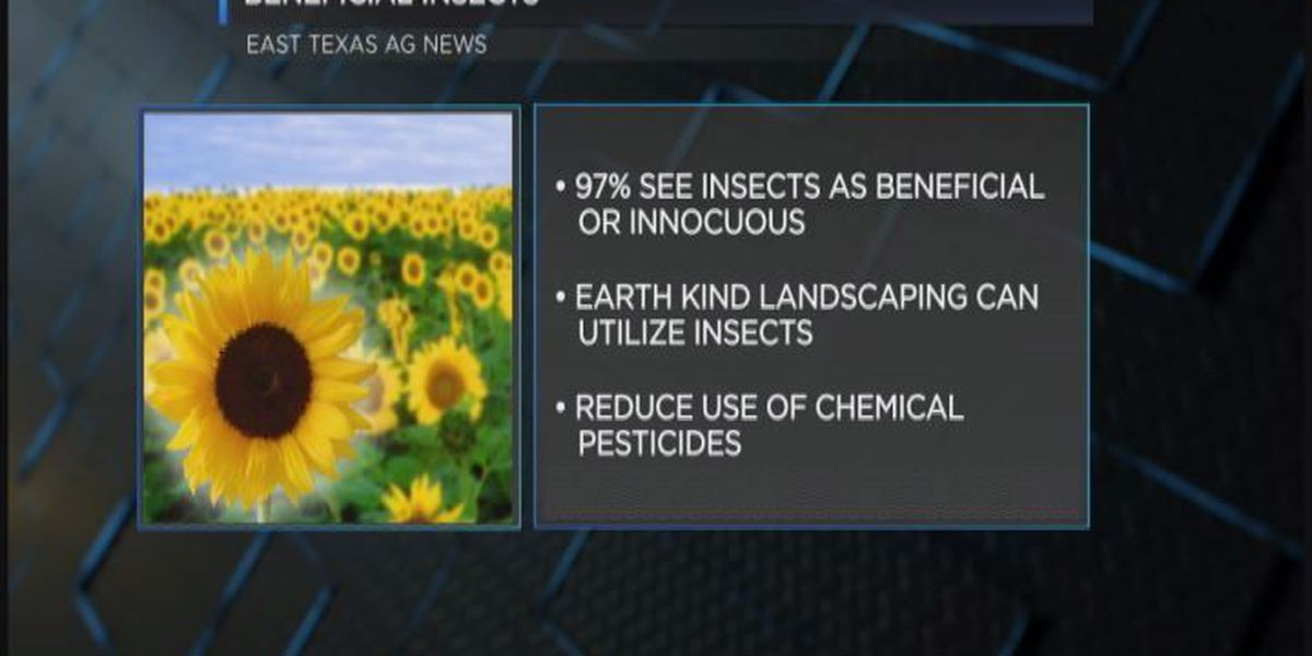 East Texas Ag News: Some insects beneficial for gardening