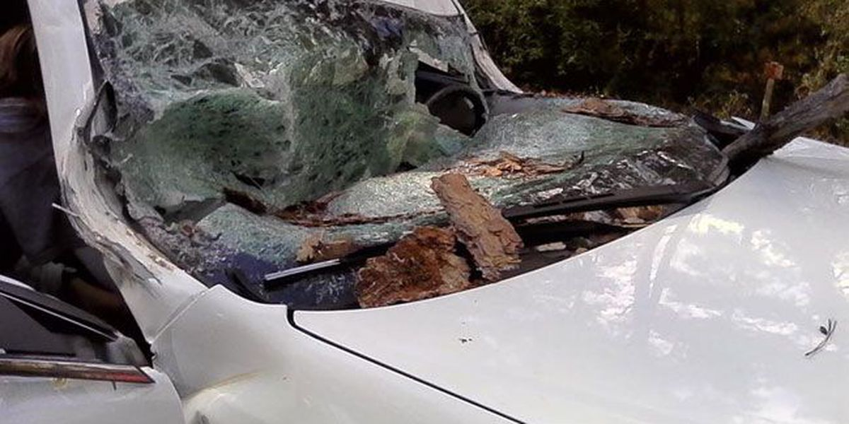 Groveton woman suffers numerous broken bones after tree falls on car