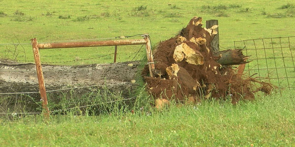 Sabine County residents begin storm recovery efforts