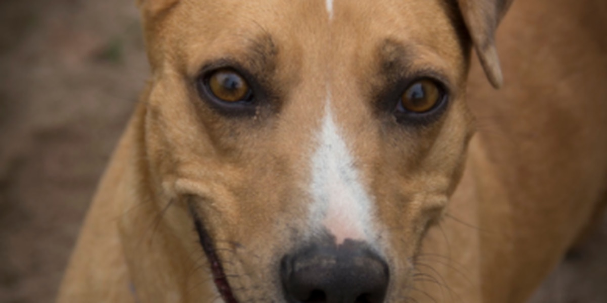 East Texas family adopts dog that had been in animal shelter for 7 years