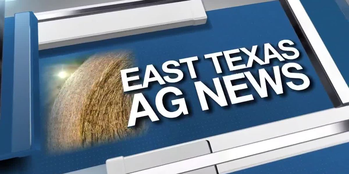 East Texas Ag News: Tips on ridding your lawn of ants this fall