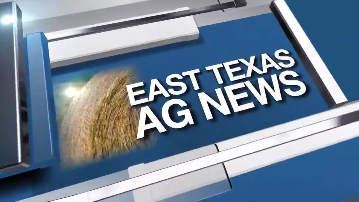 East Texas Ag News: It's time to plant your cool season annual forages