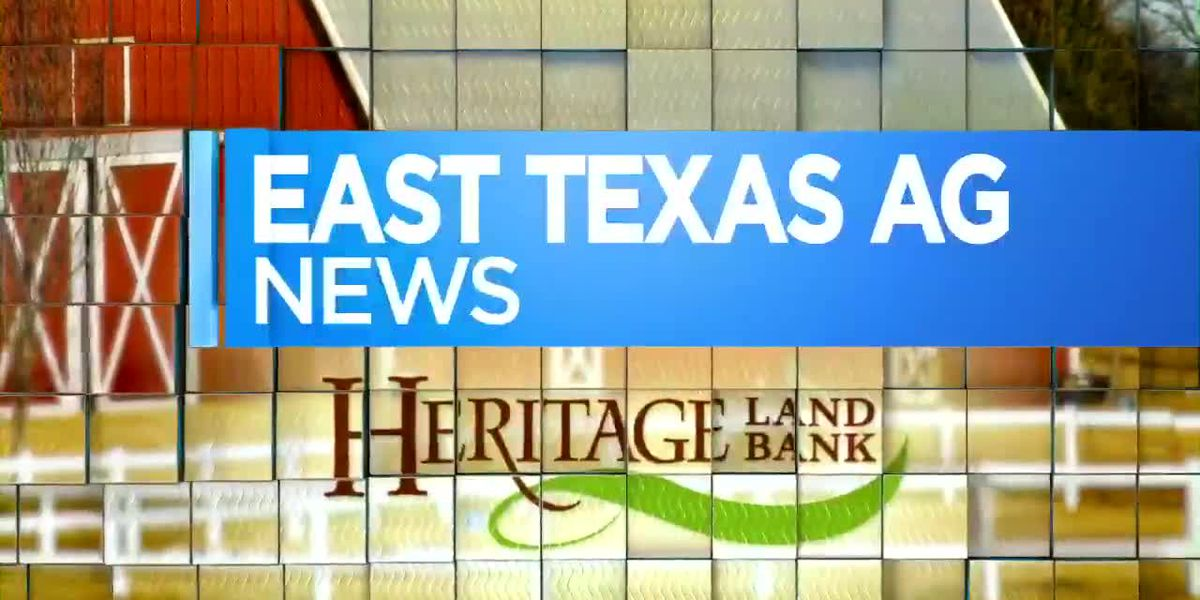 East Texas Ag News: How to avoid fungal problems in landscaping