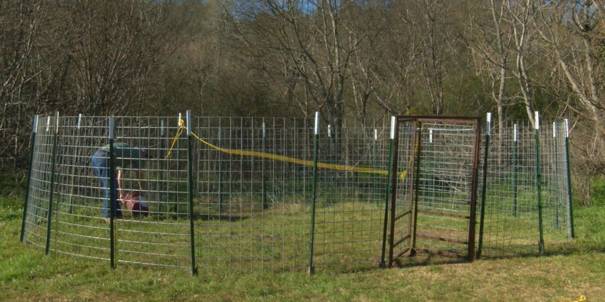 Lufkin officials set trap to curb damage caused by wild hogs