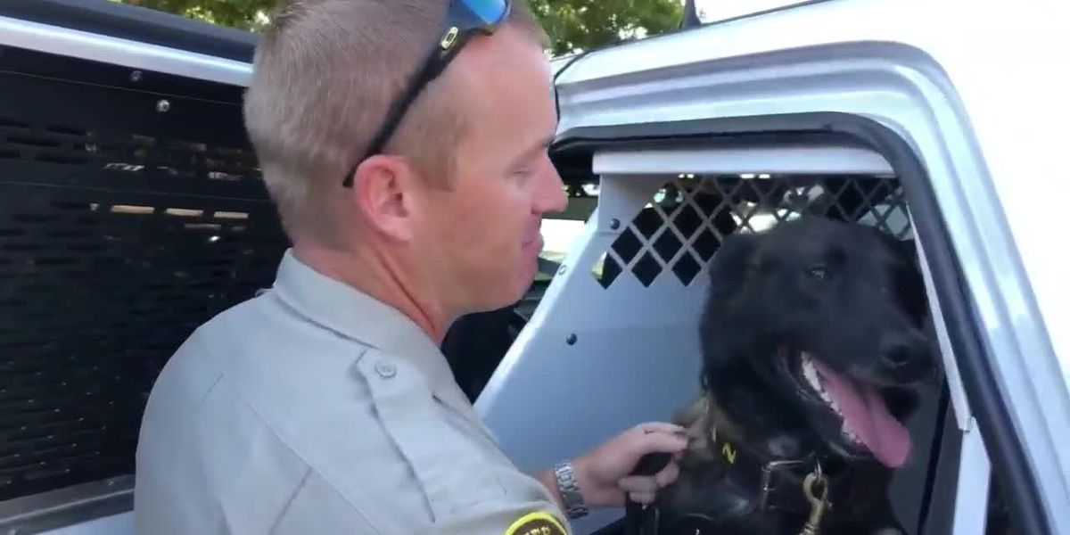 If Proposition 10 passes, K-9 officers will no longer be considered property of law enforcement agency