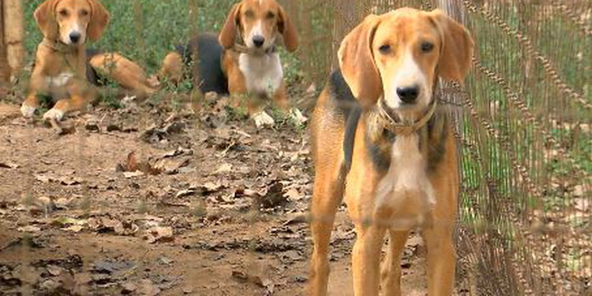 Officials discuss hunting with dogs and landowners' rights