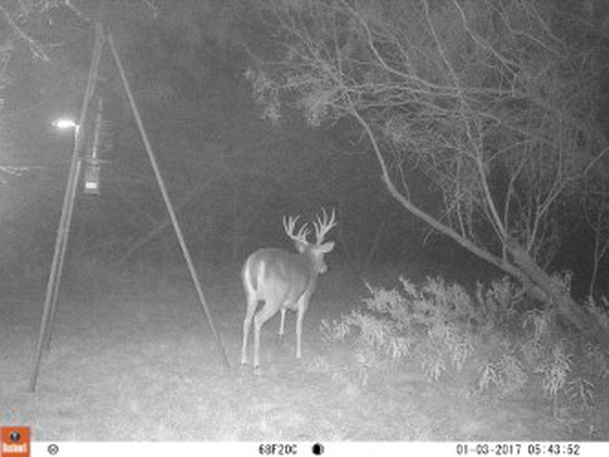 Drivers urged to take caution on roads during deer season