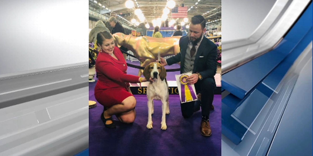 """A cut above the rest"", Crockett dog wins big at Westminster dog show"