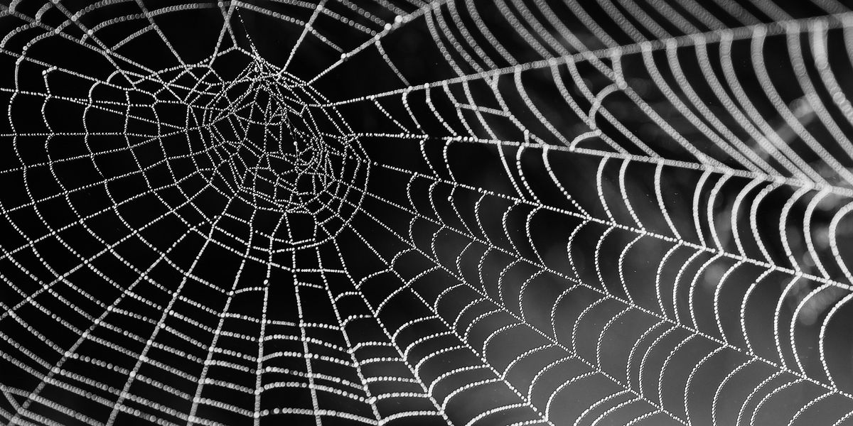'Why don't you die?': Man trying to kill spider prompts call to police