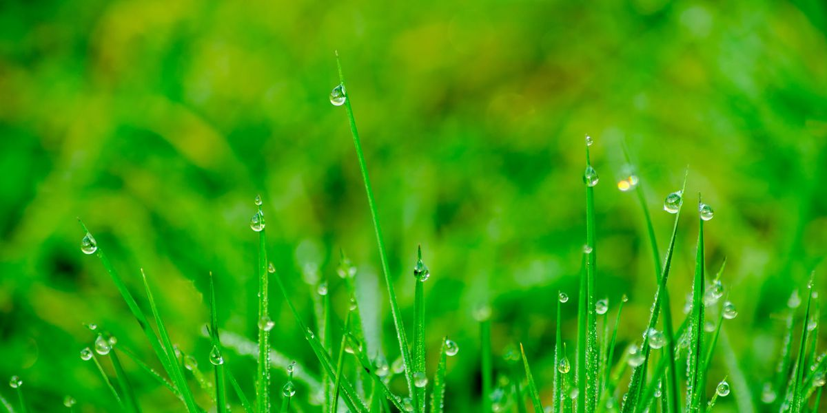 East Texas Ag News: Irrigation audit confirms proper lawn watering