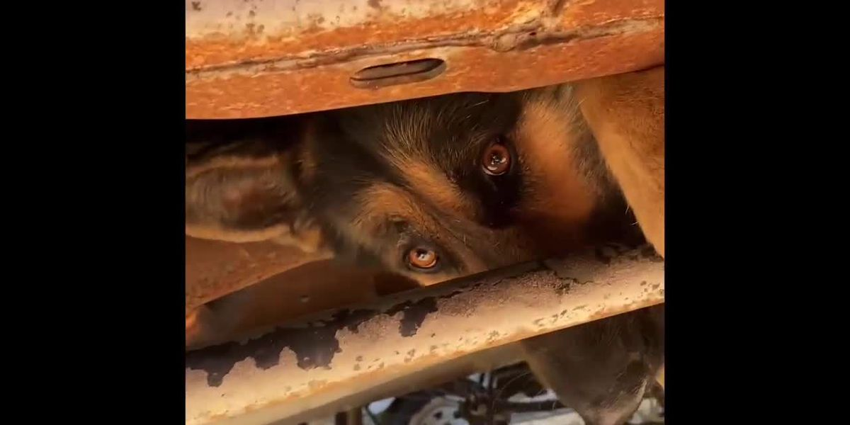 WATCH: Lufkin firefighters free frightened dog from under truck