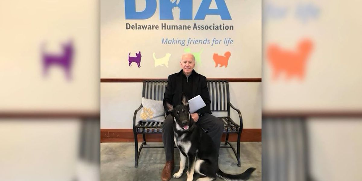 Future first dog Major Biden is a rescue, will get own 'indoguration'