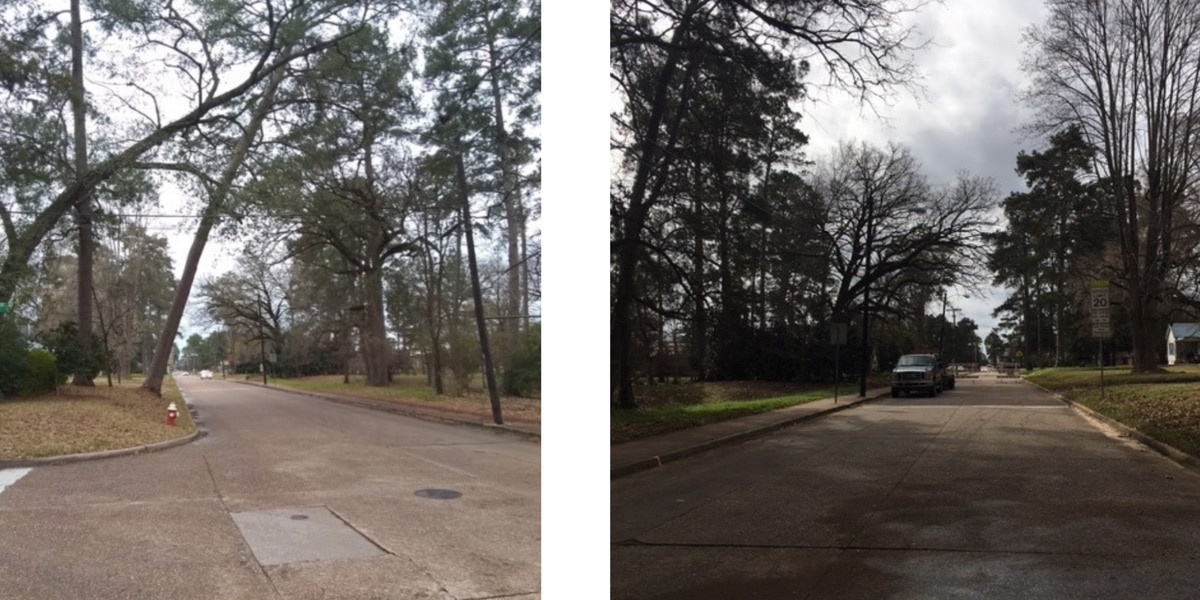 Tree that hung over Nacogdoches street for decades cut down