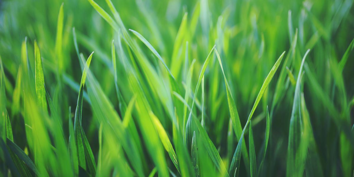Keeping grass healthy through the fall, winter months