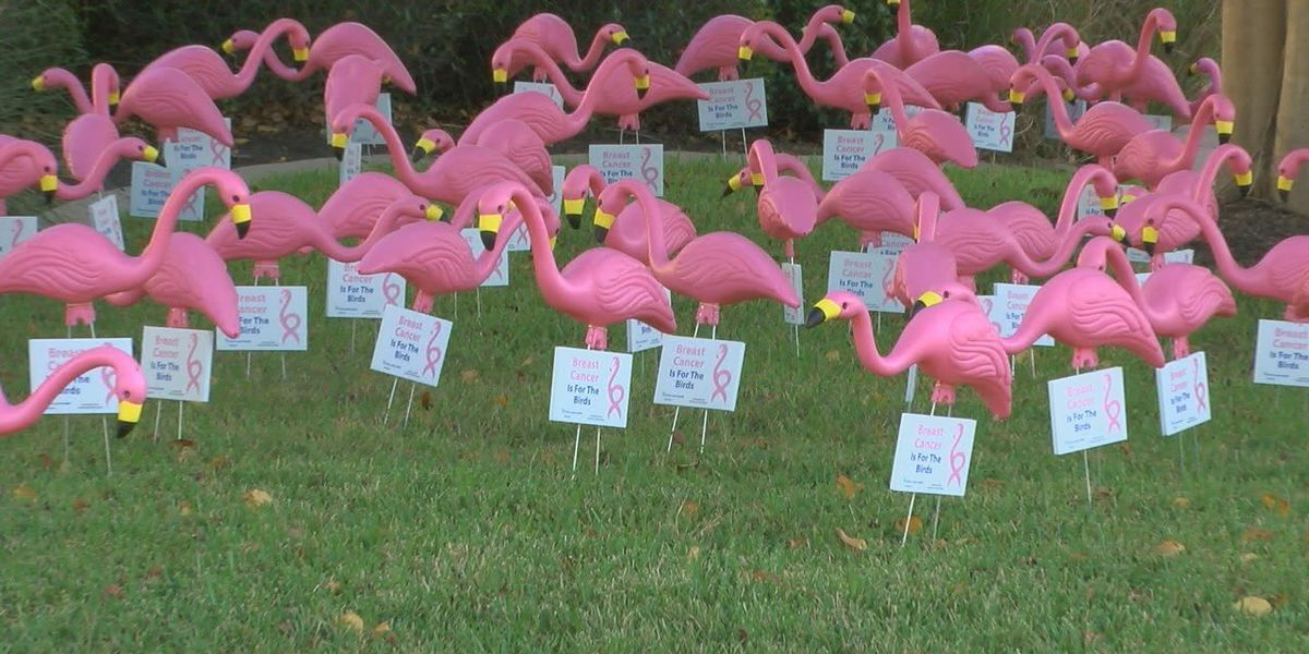 Breast Cancer is for the Birds event