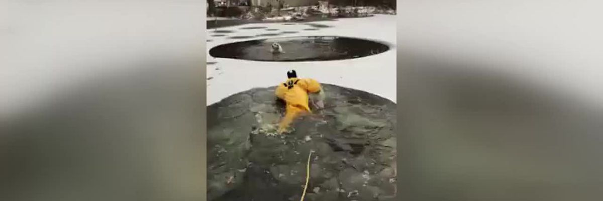 VIRAL VIDEO: Ohio firefighters rescue dog trapped in icy lake