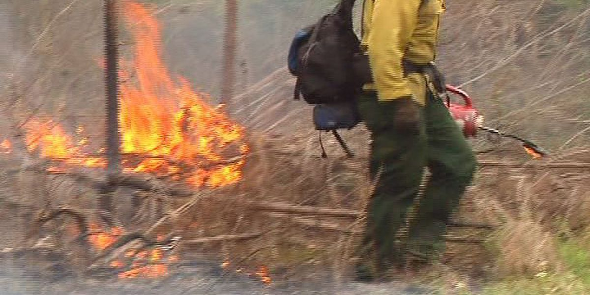 U.S. Forest service sees slower burn season after a very wet East Texas spring