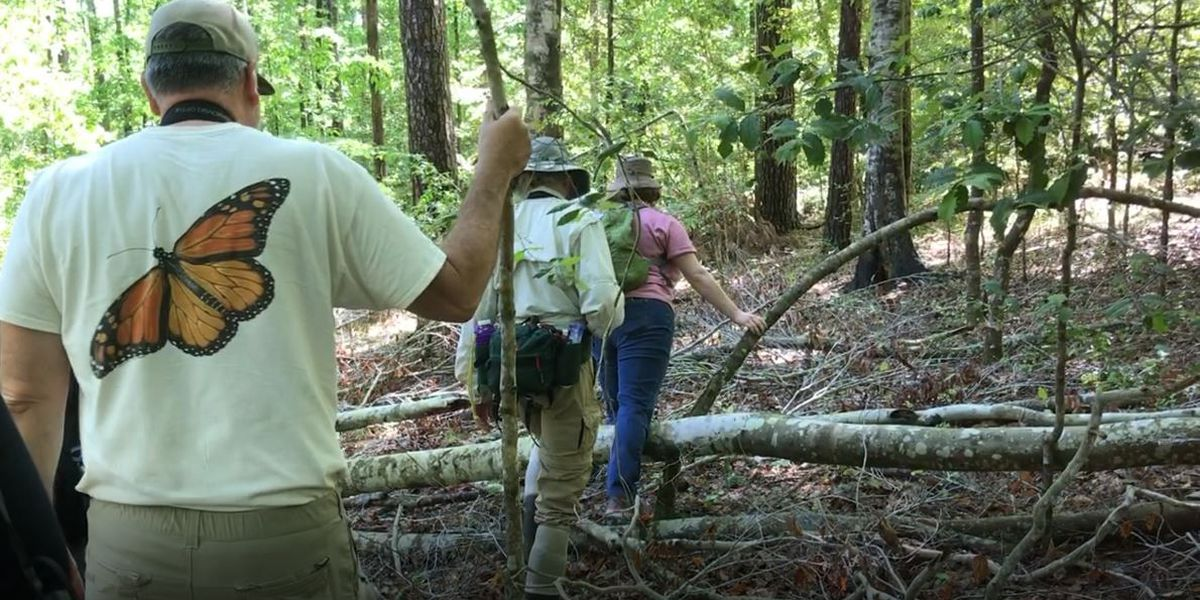 Citizens group nominates U.S. Forest lands for protection
