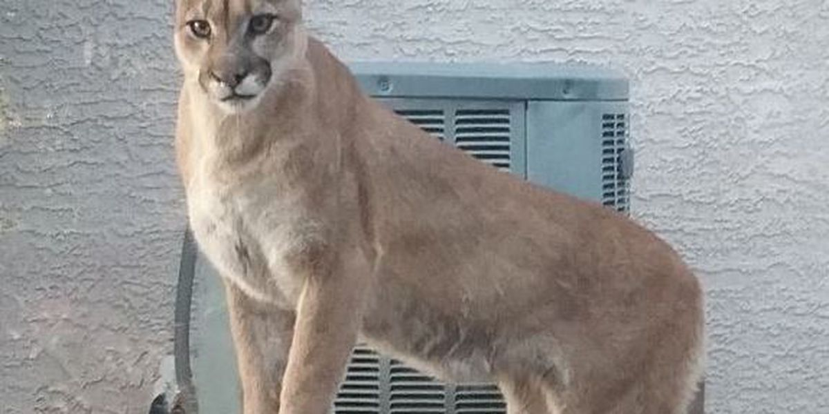 Hood County Sheriff's Office: Man found dead in woods possibly killed by mountain lion