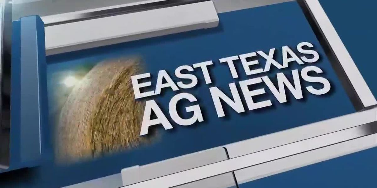 East Texas Ag News: This week's hay prices remain firm