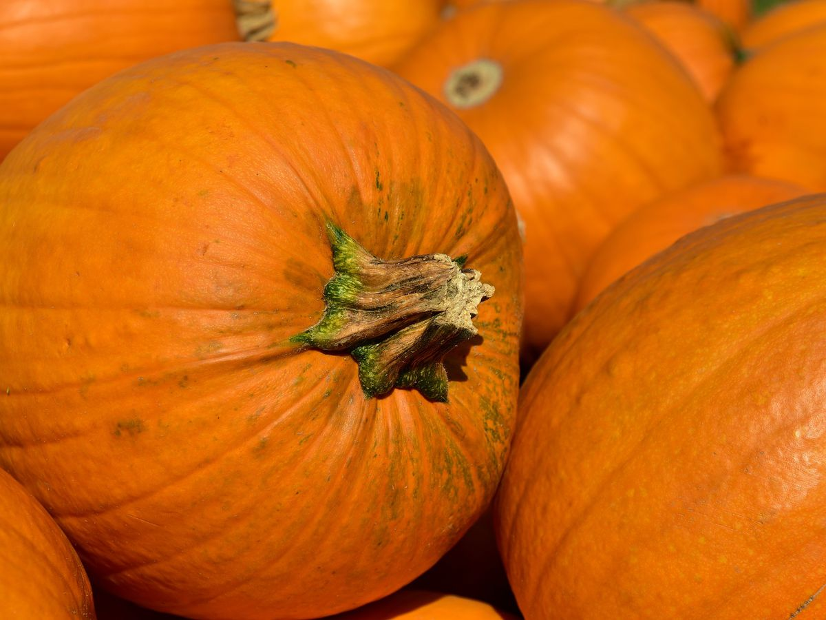 East Texas Ag News: Planting pumpkins in your late summer garden