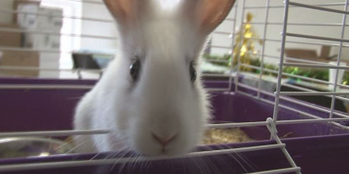 Thumper will hop her way into your heart