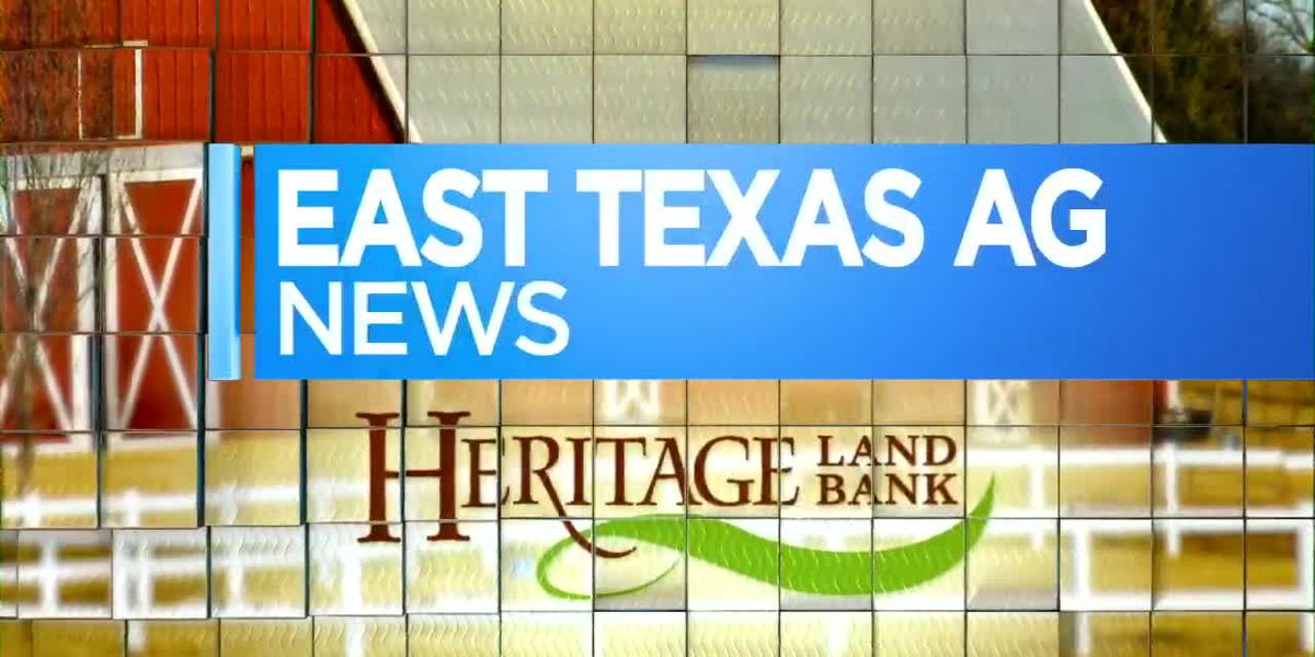 East Texas Ag News: Checking last year's seeds