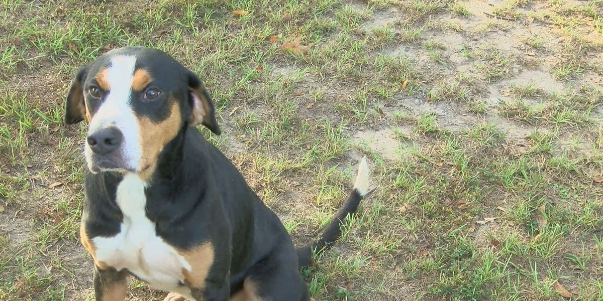 Trooper, a gentle spirit with a lot of energy, would be great fit with family