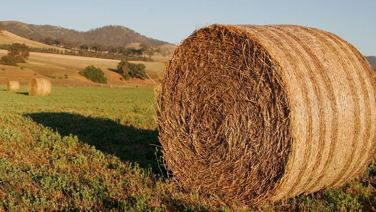 East Texas Ag News: Hay prices for this week